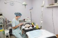 В какой ветеринарной клинике  лечить своего питомца, Фото: 6