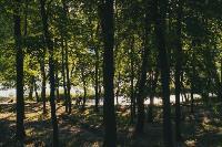 Летний день в богородицком парке, Фото: 44