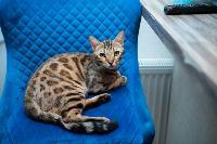 Экзотические животные в квартире, Фото: 57