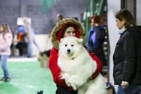 Выставка собак в Туле 14.04.19, Фото: 11