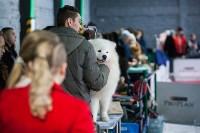 Выставка собак в Туле, Фото: 84