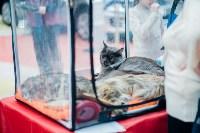 """Выставка """"Пряничные кошки"""" в ТРЦ """"Макси"""", Фото: 14"""