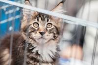 Выставка кошек в МАКСИ, Фото: 14
