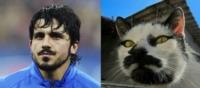 Дженнаро Гаттузо позаимствовал идею бороды и усиков у этого котейки?, Фото: 2