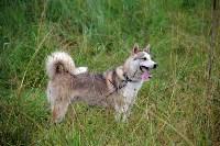 Выставка охотничьих собак под Тулой, Фото: 13
