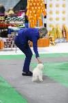Выставка собак в Туле 14.04.19, Фото: 31