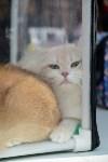 """Выставка """"Пряничные кошки"""" в ТРЦ """"Макси"""", Фото: 99"""