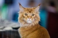 В Туле прошла выставка «Пряничные кошки» , Фото: 25