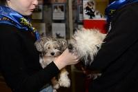 Выставка собак DogLand, Фото: 28