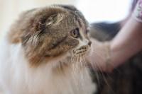 В Туле прошла выставка «Пряничные кошки» , Фото: 6