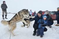 Праздник северных собак на Куликовом поле , Фото: 17