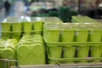 Леруа Мерлен: Какие выбрать семена и правильно ухаживать за рассадой?, Фото: 3