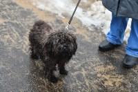 В Комсомольском парке прошёл рейд по выявлению собачников-нарушителей, Фото: 6
