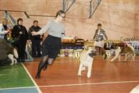 В Туле прошла всероссийская выставка собак, Фото: 13