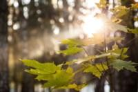 Центральный парк, утро, осень, Фото: 18