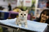 Выставка кошек, Фото: 3