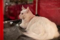 Пряничные кошки, Фото: 4