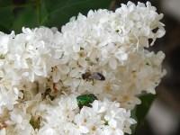 Приходила к Мухе Бабушка-пчела, Мухе-Цокотухе Меду принесла..., Фото: 5