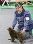 Выставка собак в Туле 14.04.19, Фото: 19