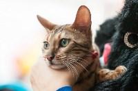 Выставка кошек в МАКСИ, Фото: 13