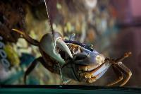 Животные: груминг и ветклиники, Фото: 24