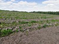 Рекордный лес-лабиринт, Фото: 9