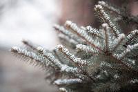 Первый снег, 2.12.2014, Фото: 22
