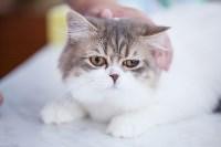 """Выставка """"Пряничные кошки"""". 15-16 августа 2015 года., Фото: 91"""