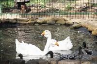 В Новомосковске открылся мини-зоопарк, Фото: 17