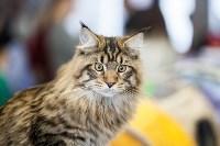 В Туле прошла выставка «Пряничные кошки» , Фото: 16