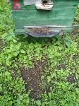 Гибель пчел в Щекинском районе, Фото: 5