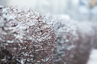 Тула после снегопада. 23.12.2014, Фото: 55