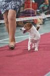 Выставка собак в Туле 26.01, Фото: 68