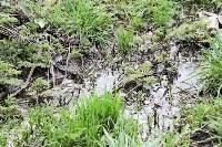 Богородчан затопило канализацией, Фото: 21
