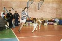 В Туле прошла всероссийская выставка собак, Фото: 14