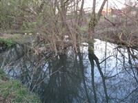 Спиленные деревья в ручье березовой рощи, Фото: 9