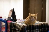 Пряничные кошки, Фото: 55
