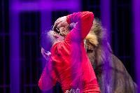 Шоу фонтанов «13 месяцев»: успей увидеть уникальную программу в Тульском цирке, Фото: 232