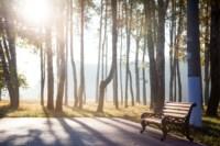 Центральный парк, утро, осень, Фото: 30