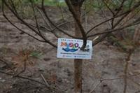 Высадка молодого леса, Фото: 42