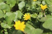 Краски весны в Туле, Фото: 6