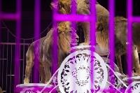 Шоу фонтанов «13 месяцев»: успей увидеть уникальную программу в Тульском цирке, Фото: 198