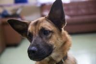 Тульский центр ветеринарной медицины открылся по новому адресу, Фото: 3