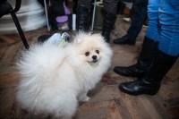 Всероссийская выставка собак 2017, Фото: 73