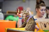 В Туле прошла выставка «Пряничные кошки» , Фото: 36