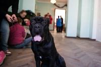 Выставка собак в Туле, 29.11.2015, Фото: 15