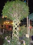 Цирк деревьев, Фото: 5