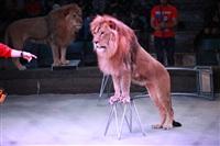 Новая программа в Тульском цирке «Нильские львы». 12 марта 2014, Фото: 10