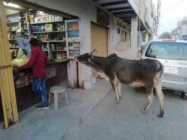 Индийская корова пришла в магазин:)