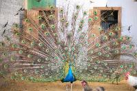 Куда свозить детей посмотреть на животных в 100 км от Тулы: обзор, Фото: 4